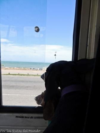 Pioja y Pumba conociendo el mar en Mar del Plata