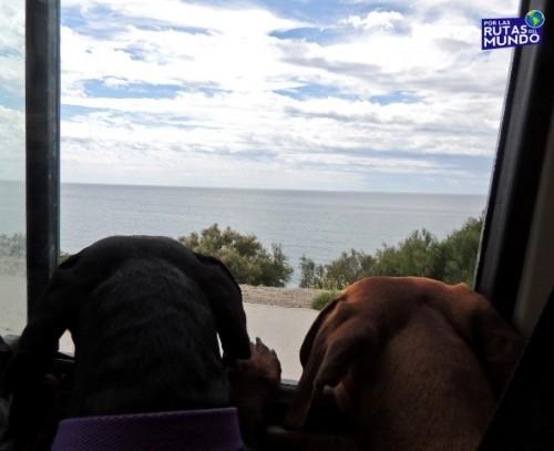 Pioja y Pumba conociendo el mar