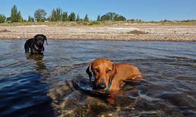 Guía para viajar con perros