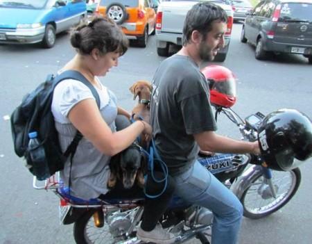 viajando en moto con dos perras salchichas zona de confort