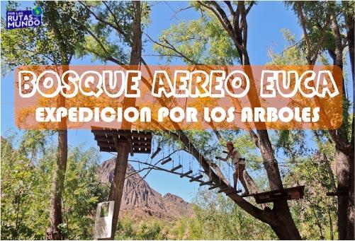 Bosque aereo Euca en San Rafael – Expedición por los árboles