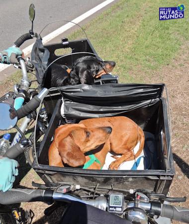 Pioja y Pumba - Viajar en bicicleta con perros