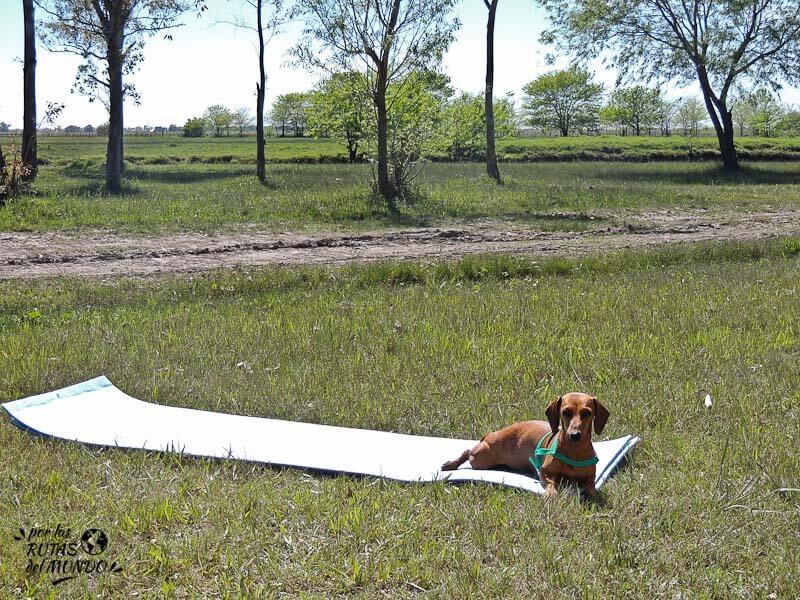 por-las-rutas-del-mundo-viajar-con-tu-perro-y-recibis-ayuda