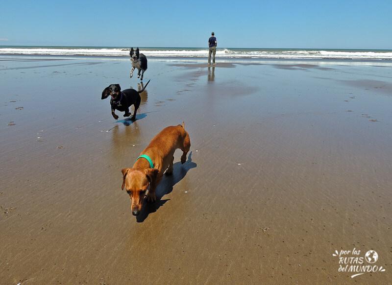 Vacaciones con tu perro: playas de Uruguay que se pueden ir con mascotas