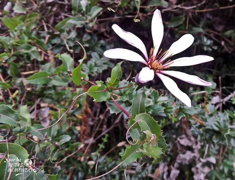 por-las-rutas-del-mundo-una-flor-blanca