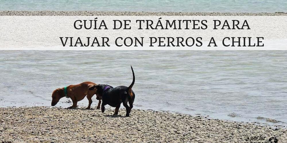 Guía de trámites para viajar con perros a Chile