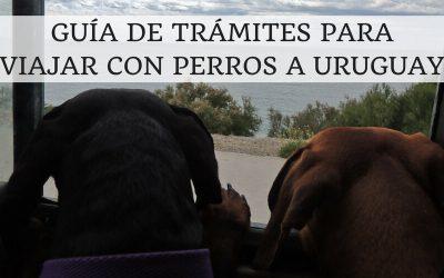 Guía de trámites para viajar con perros a Uruguay